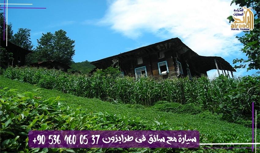 مزارع الشاي في ريزا الشمال التركي